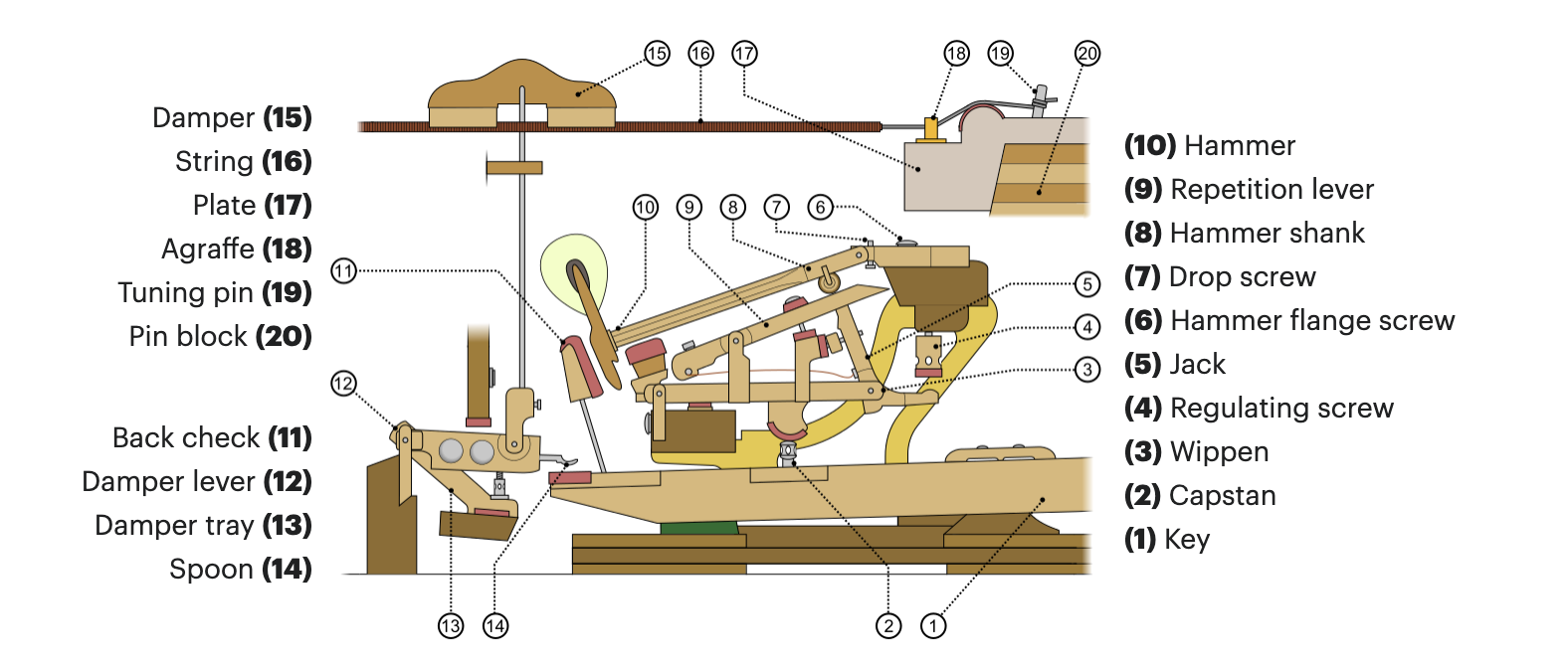 Labelled diagram illustration of piano action.
