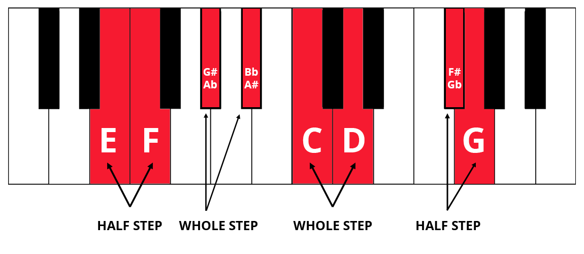 Keyboard diagram with half steps and whole steps highlighted and labelled. Example: E and F is half step, C to D is whole step.